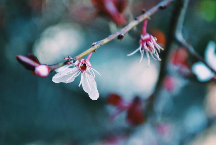 flores Jenn